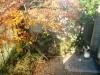 我が家の庭にも秋が来たージューンベリーの庭