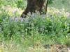 紀尾井の森のお花畑